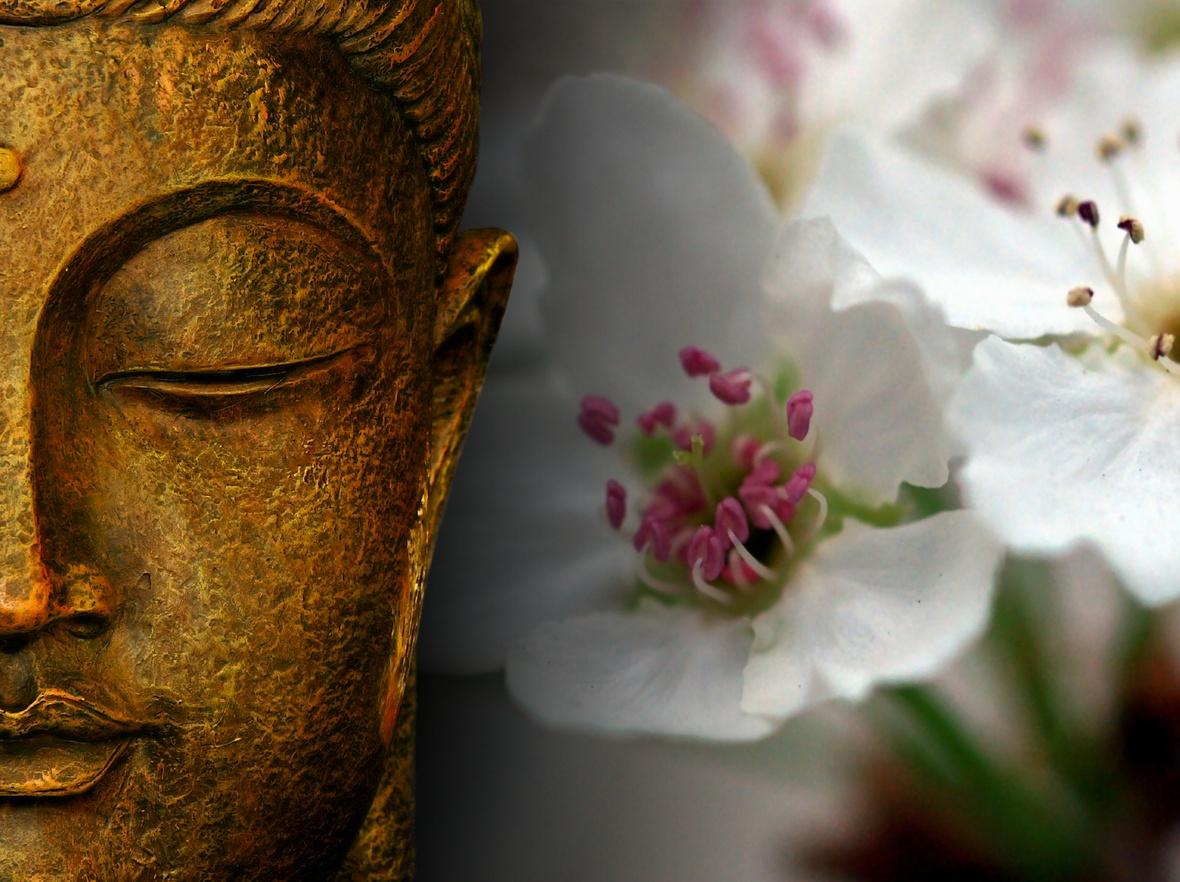 La nature nous montre la voie observons l la voie for Fond ecran gratuit zen