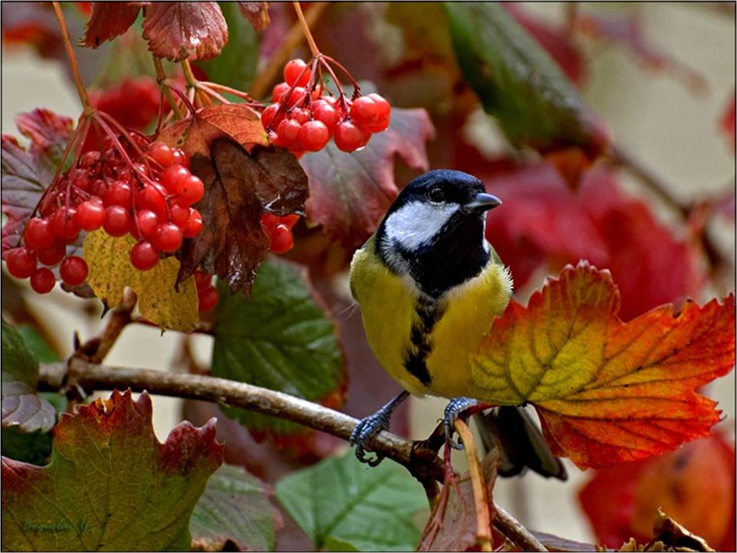 Jardin la voie sacr e de la nature for Oiseaux de jardin au printemps